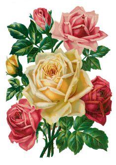 Decoupage Vintage, Vintage Paper Dolls, Victorian Flowers, Vintage Flowers, Art Floral, Flower Cards, Paper Flowers, Flower Coloring Sheets, Still Life Flowers