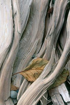 driftwood & leaves