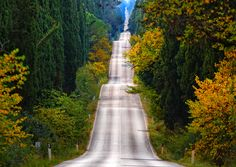 The road of cypresses, Tuscany, Italy