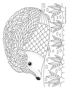 Fall Animal Adult Coloring Pages Hedgehog Adult Coloring Page