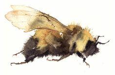 bee KO13 limited edition giclee print 17x15cm Kate Osborne, United Kingdom Watercolor Animals, Watercolor And Ink, Watercolor Paintings, Watercolors, Kate Osborne, Bee Painting, Insect Art, Bee Art, Art Graphique