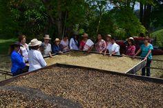 Risaralda presente en expoespeciales con representantes de varias asociaciones de café