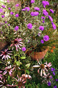 Gartenkalender: Was im Oktober zu tun ist - http://www.gartenmonat.de/html/gartenmonat_oktober.htm