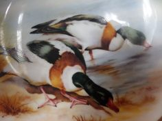 Mallard ducks plate, Collectors plate, dabbling in water, 8 inches across, water birds, looking for food, A J L gift ware, Stoke on Trent, by MaddisonsRainbow on Etsy