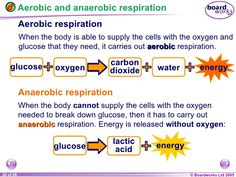aerobic and anaerobic word equation - Google Search
