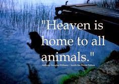 """Per previous pinner.""""When Jesus comes again we'll see all our animals who have gone to be with Jesus in Heaven.If your pet is on the way to the rainbow bridge always remember Jesus will take very very VERY good care of them:)"""". Dog Quotes, Animal Quotes, Friend Quotes, I Love Dogs, Puppy Love, Animals And Pets, Cute Animals, Pet Loss Grief, Thing 1"""
