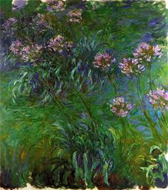 Agapanthus ~ Monet 1917