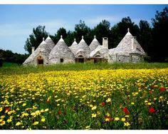 Valle d'Itria - Cisternino, Brindisi, province of brindisi , region of Puglia, Italy
