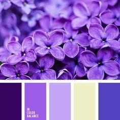 Color Palette No. 1889
