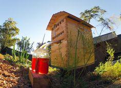 Cette ruche révolutionnaire permet de récolter le miel sans perturber les abeilles