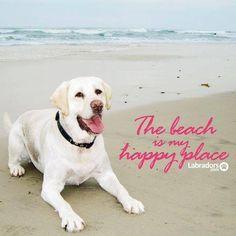 Check us out at Labradors.com  #yellow #Labs #beachdog