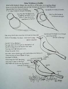 How to draw a robin worksheet | Drawing Lessons for the Young Artist | Adron Dozat