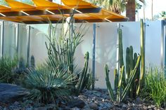 Corners & Edges 3 - Palm Springs - Planting - Steve Martino - Landscape Architect