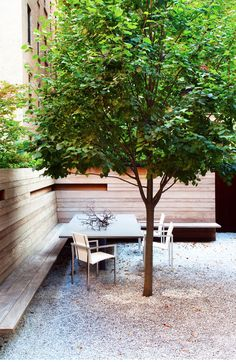Pretty Trees for Patios, Paths and Other Tight Spots Choose trees for their size, shape and rate of growth — or shape them to fit your space. Here's how to get started--Contemporary Landscape by Billinkoff Architecture PLLC Outdoor Rooms, Outdoor Gardens, Outdoor Living, Outdoor Decor, Contemporary Landscape, Landscape Design, Garden Design, Fence Design, Patio Design