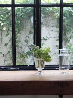 Masaki& diary May 2014 Plant Cuttings, Green Garden, Cut Flowers, Windows, Dining, Interior, Shop, Plants, Pictures