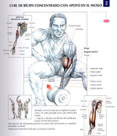Ejercicios Biceps
