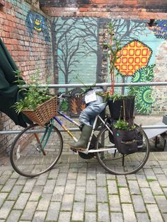 Bicycle and jeans planter (Cobden Chambers, Nottingham)