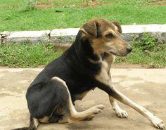Understanding Dog Displacement Behaviors
