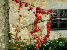 Wild berries Four Square, Berries, Wreaths, Fruit, Decor, Exotic Fruit, Decoration, Door Wreaths, Bury