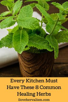 Great article on 8 healing herbs you should have in your kitchen and you will also find awesome benefits of each herbs.