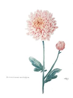 Chrysanthemum's The Word Eye For Detail, Chrysanthemum, Botanical Prints, Beautiful Artwork, Things To Come, Watercolor, Words, Creative, Flowers
