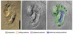 Αποτυπώματα ποδιών στην Κρήτη ανατρέπουν τις θεωρίες της ανθρώπινης εξέλιξης