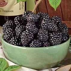 Ebony King Blackberry