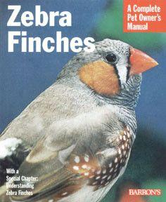 Pet Zebra Finches