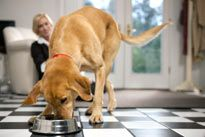 The Best Dog Food for your Dog - How do you Choose the Best?