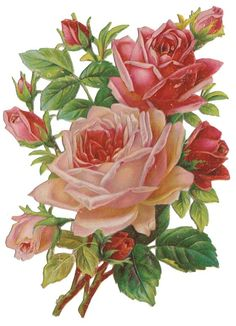 Decoupage Vintage, Simple Flower Drawing, Flower Art, Beautiful Flower Quotes, Beautiful Flowers, Vintage Flower Prints, Vintage Flowers, Art Floral, Vintage Illustration