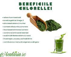 Consumul dechlorella favorizează un important aport de elemente nutritive esențiale dintre cele mai variate. 💪🌱🌿🙏 Ea conține: ✔55 – 60 %proteine vegetale ✔toți aminoacizii esențiali ✔numeroase minerale (mai bogată în fier decât spirulina) ✔oligo-elemente ✔acizi graşi (omega-3) ✔vitamine (extrem de bogată în E şi B12 ✔micro-fibre (favorizează tranzitul intestinal) ✔pigmenți şi enzime (clorofilă şi luteină) _______________________ • • • • • #healaria #vindecareprinplante #plantenaturale… Parsley, Herbs, Instagram, Food, Plant, Essen, Herb, Meals, Yemek
