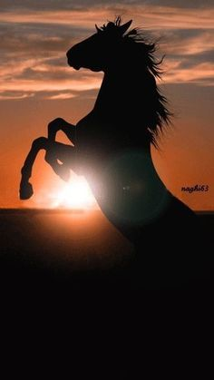 Horse rearing with sunset shining through silhouette.