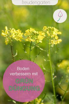 Bei der Gründüngung werden Pflanzen zur Bodenverbesserung angebaut, die den Boden schützen und neue Nährstoffe geben. Wir geben Tipps, wie Gründüngung im Garten geht und welche Pflanzen sich eignen.