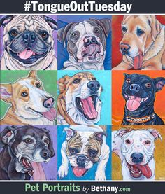 Kona was featured!  It's ‪#‎tongueouttuesday‬ everyone! A few #tongueout doggy smiles from past custom pet portrait dog paintings from Pet Portraits by Bethany.