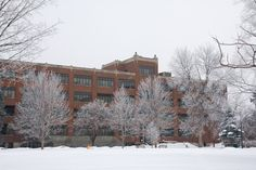 Frosted trees border the academic buildings on the St. Paul campus of St. Catherine University. (Photo by Rebecca Zenefski '10)