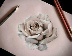 Rose by Karolina Czekaj , Poland