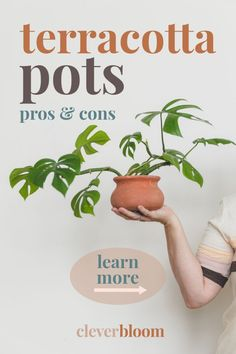 Are you wondering what type of pots you should use for your plants? Confused about the different materials? Learn all about terracotta pots and why they might be good for your plants. Pros, cons, and the best terracotta pots! Clever Bloom #terracottapots #houseplants