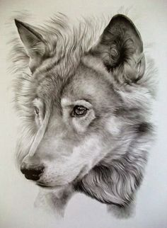 (2) Awesome Pencil Drawing Photos. - Bilder Land
