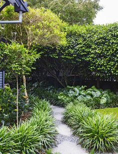 Landscaping inspiration from a structured New Plymouth garden - Homes To Love Backyard Garden Landscape, Garden Landscape Design, Landscape Steps, Landscaping With Rocks, Backyard Landscaping, Landscaping Ideas, Landscaping Software, Inexpensive Landscaping, Landscaping Melbourne