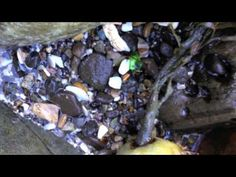 Leveled Intervention Red Box Video: Red LLI System Lesson 16:  Treasure from the Sea