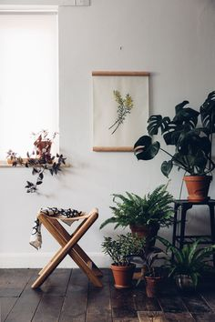 Really can you ever have too many plants?? We dream of turning our home into a real indoor jungle full of Botanical inspiration.