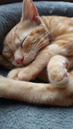Mon Bobbycat