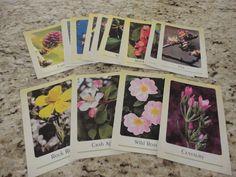 florais de bach - conjunto 40 cartas cartões para dinâmicas