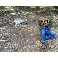 @geloyconcepcion chilling with #kangaroo & #joey #Anglesea #GreatOceanRoad #Australia. #Kaffeine #Phoenix2015 #roadtrip #reclining #SurfCoast #goodtimes by kaffeinepaints