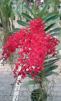 Designs For Garden Flower Beds Hibiscus Flower Seeds For Planting Orchids Garden, Orchid Plants, Exotic Plants, Orchid Seeds, Flower Seeds, Hibiscus Flowers, Exotic Flowers, Most Beautiful Flowers, Pretty Flowers