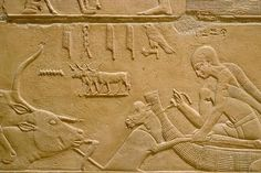 akg-images  SAKKARA, TOMB OF KAGEMNI, CATTLE DRIVESakkara – Saqqara (Middle Egypt), Tomb of Kagemni – Mastaba 25 (Mastaba of vizier Kagemni; Old Kingdom, early 6th Dynasty, after 2347 BC).  Cattle drive through...