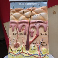 El manejo especializado de la clínica de pelo es único por eso lo garantizamos