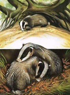 Home art gcse 65 ideas Badger Illustration, Illustration Art, Animal Magic, Fox Art, Walk In The Woods, Wildlife Art, Pretty Art, Oeuvre D'art, Stone Painting