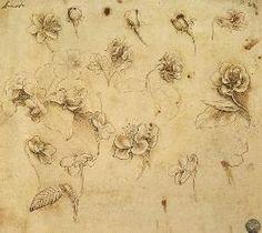 da Vinci Leonardo - Study of flowers
