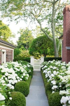 white hydrangeas and boxwood
